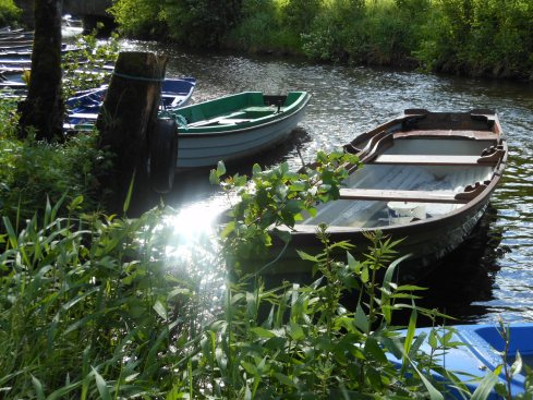 Fancy a row in Killarney National Park?