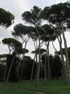 Umbrella pines at the Borghese Gardens.