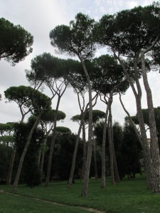 Umbrella pines at the Borghese Gardens.